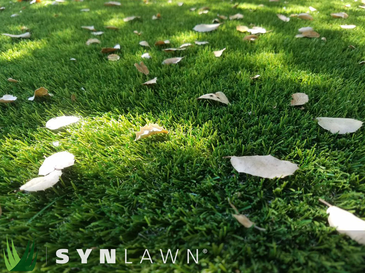 SYNLawn Landscape Photo 15