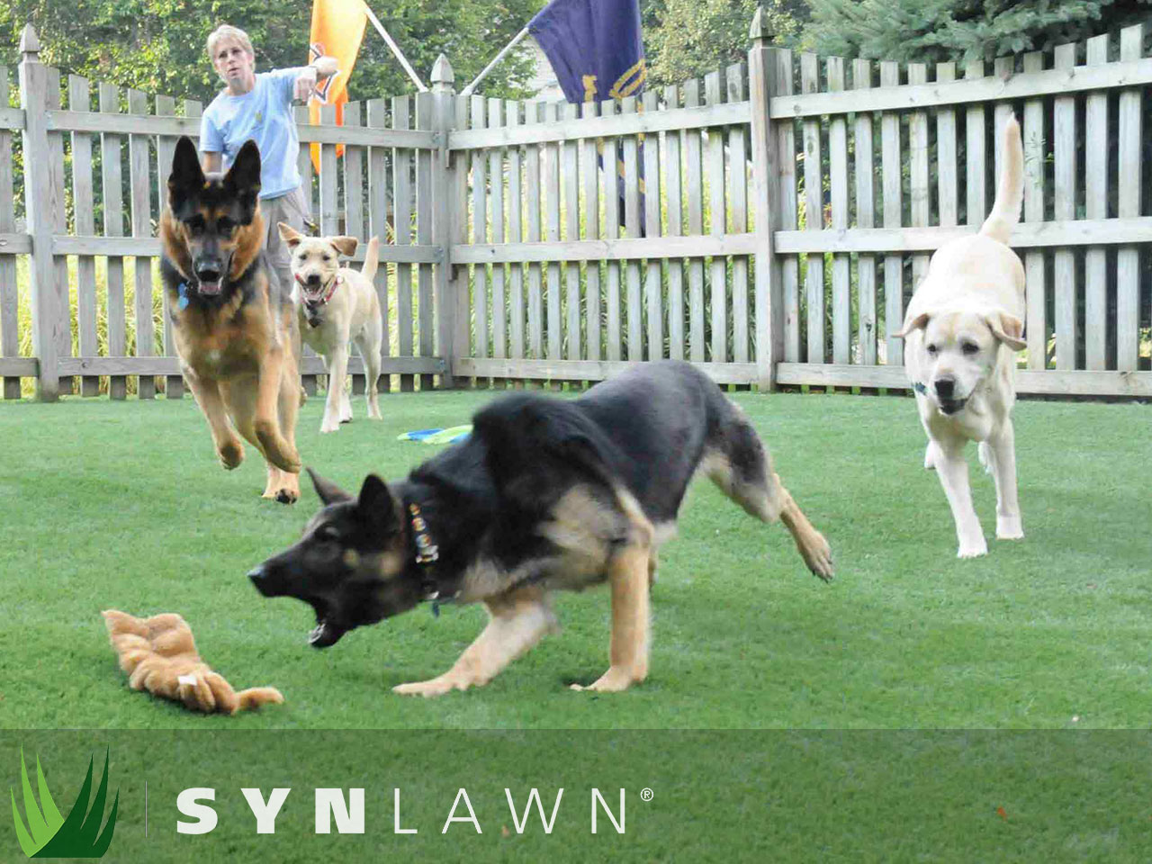 ... SYNLawn Pets Photo 20 ...